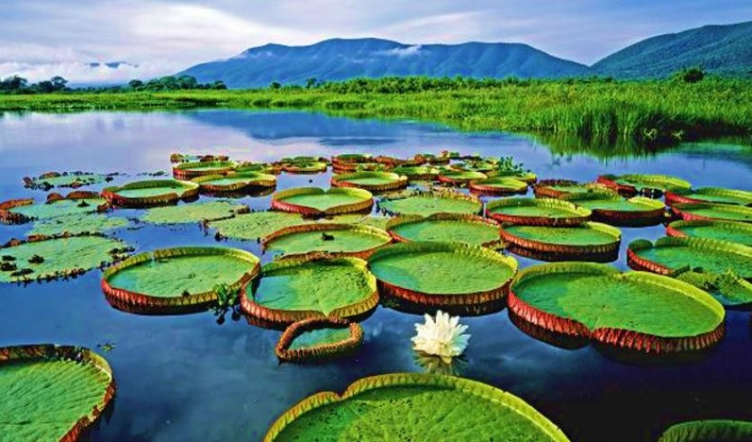 Amazon Nehri